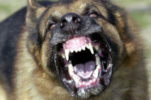 vihainen koira